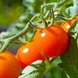 Польза помидоров для здоровья человека