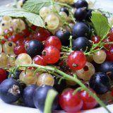 Польза смородины для здоровья человека
