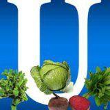 Польза витамина U для здоровья человека