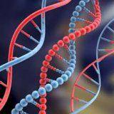 Привычки человека могут изменить гены