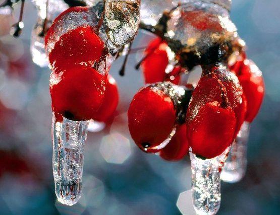 Продукты, повышающие гемоглобин в крови