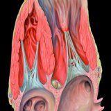 Риски связанные с аневризмой сердца