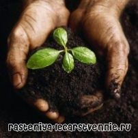 Роль растений в жизни человека и природы