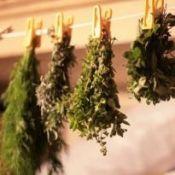 Сбор, сушка и хранение лечебных трав