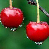 Состав и лечебные свойства вишни