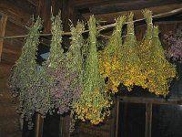 Сушка, хранение лекарственных растений