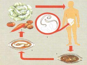 Трихоцефалез симптомы и лечение