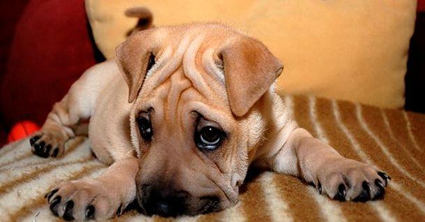 У собаки понос: что нужно делать в первую очередь?