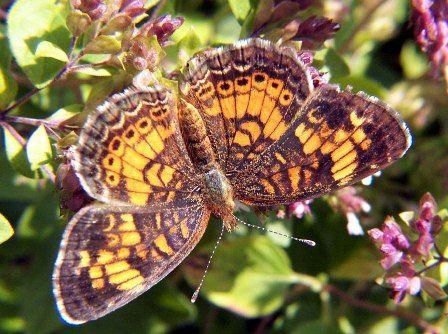 Uczyć się od natury. Motyl.