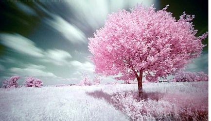 Uczyć się od natury. Drzewo.