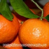 Варенье из мандаринов дольками и из мандариновой кожуры