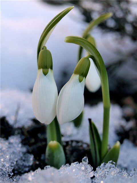 Весна: обновление мира – обновление себя
