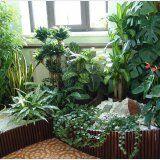 Виды комнатных лекарственных растений