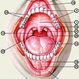 Mechanizmy obronne ustny